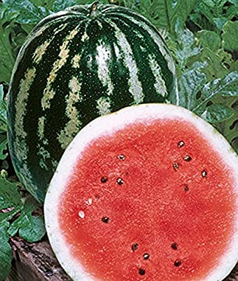 Crimson Sweet Heirloom Watermelon Seeds