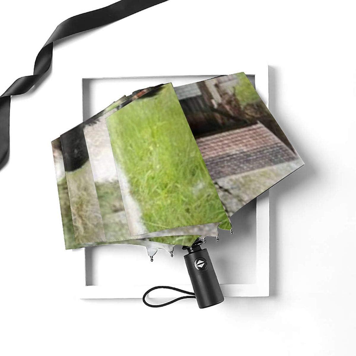 Scotland Black Sheep Automatic Open Folding Compact Travel Umbrellas For Women