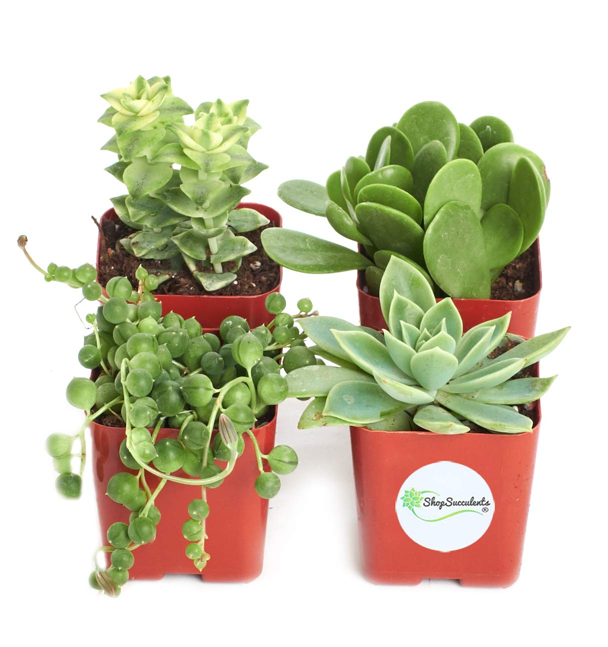 Shop Succulents Green Succulent (Collection of 4)