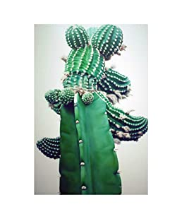 Powerfulline Nordic Cactus Plant Canvas Painting Poster Wall Art Picture Living Room Decor Animal Cartoon Character Art Painting 3# 2130cm