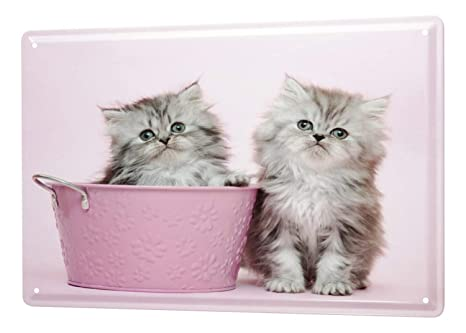 Decoración Gato Cartel de chapa Placa metal tin sign Gatito Cachorro cubo de color rosa Letrero