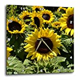 3dRose Patricia Sanders Sunflowers Wall Clock, 10 by 10-Inch For Sale