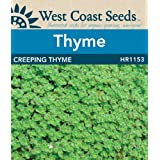 Creeping Thyme Seeds (approx. 743 seeds)