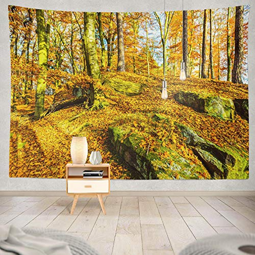 Wood Bleach Panorama Woodland - ONELZ Decor Collection, Autumn Forest Scene Autumn Woodland Forest Autumn Forest Trees Bedroom Living Room Dorm Wall Hanging Tapestry 60