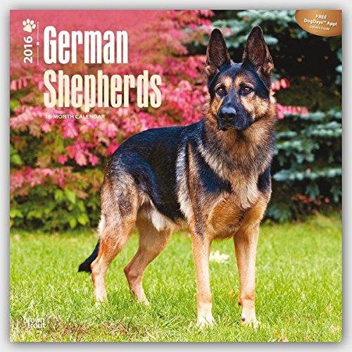 German Shepherds 2016 - Deutsche Schäferhunde - 18-Monatskalender mit freier DogDays-App: Original BrownTrout-Kalender [Mehrsprachig] [Kalender] (Wall-Kalender)