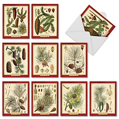 M9627XSG Pining For Christmas: 10 Assorted Christmas Note Cards Showcasing Vintage Pine Cone Classification Images For The Holiday Season, w/White Envelopes.