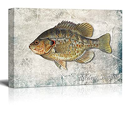 Green Redear Sunfish Illustration on a Textured Background, it is good, Elegant Visual