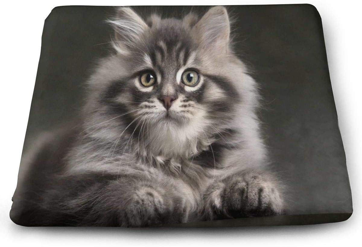 ADGoods Cojín de Asiento Cuadrado Square Seat Cushions Long Haired Gray Kitten Premium Comfort Memory Foam Chair Pads For Office,Kitchen,Travel,Car