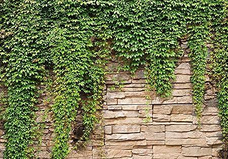 murando Papier peint intiss/é 350x256 cm D/écoration Murale XXL Poster Tableaux Muraux Tapisserie Photo Trompe loeil mur noyaux mur lierre b-A-0173-a-d