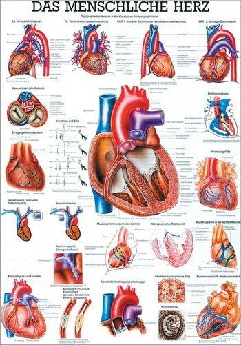 Ruediger Anatomie TA12 Das menschliche Herz Tafel, 70 cm x 100 cm, Papier