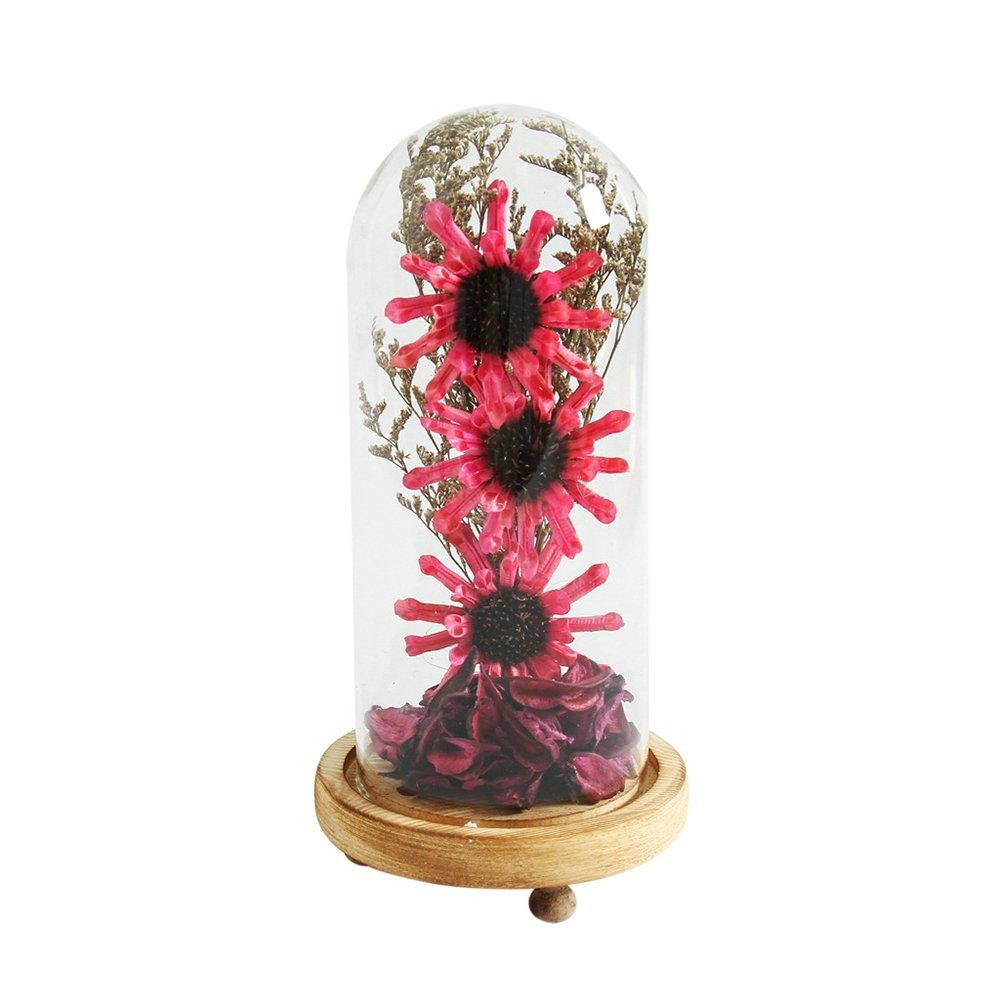 eroute66 Showcase Dry Flower Desktop Ornament Glass Wooden Base Home DIY Decor