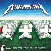 Master of Puppies three-weeks-old lovesick puppy