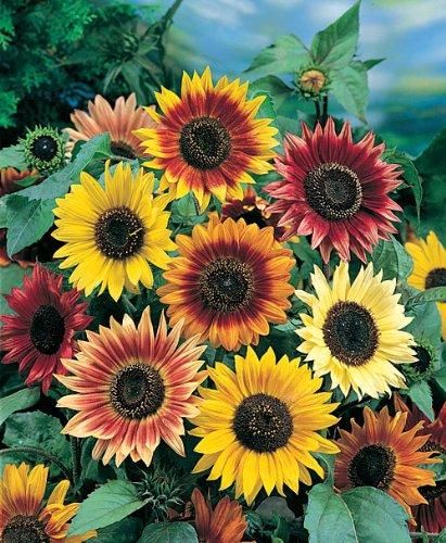 Instant Flower Garden - 5