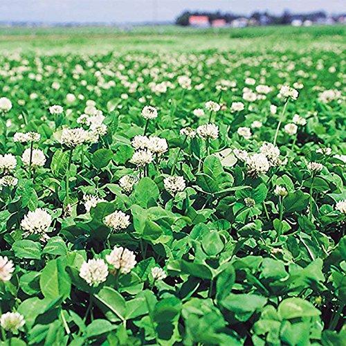 【種 5kg】 シロクローバ 普通種 緑化用 景観用 緑肥 [播種期:3~10月] 雪印種苗 米S代不 B06XTKH5XX
