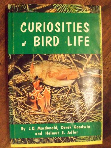 Curiosities of Bird Life, MacDonald, J. D. , Et Al