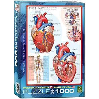 Amazon.com: EuroGraphics Human Body (The Heart) Puzzle (1000-Piece ...