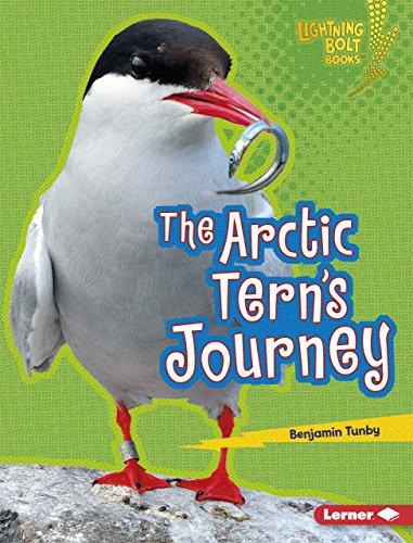 The Arctic Tern's Journey (Lightning Bolt Books ® - Amazing Migrators) (Migrator Bird)