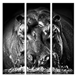 JP London X 3 Panels At 16in by 48in LTCNV1 X 1057589 Jpl and Gorazd Golob Present Power Hippo Lodge Black White Animal Triptych 3 Huge Overall Heavyweight Gallery Wrap Canvas, Extra Large
