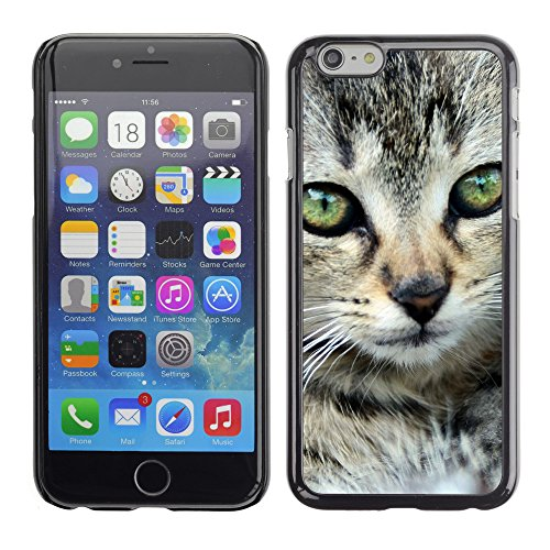 Premio Sottile Slim Cassa Custodia Case Cover Shell // V00003018 chaton // Apple iPhone 6 6S 6G PLUS 5.5""