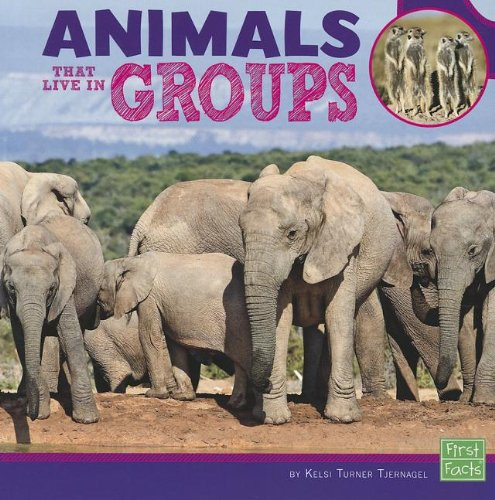 Animals Group - Animals That Live in Groups (Learn about Animal Behavior)