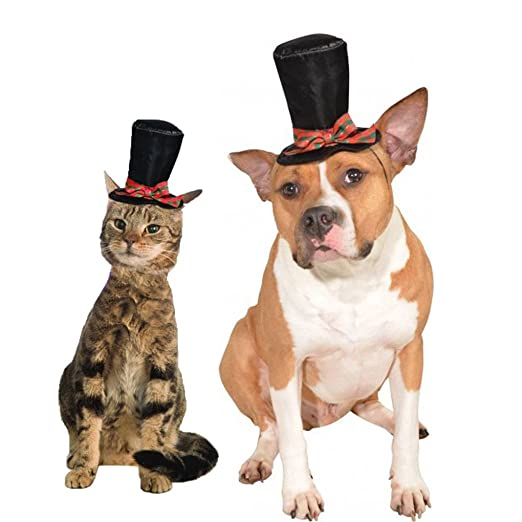 6656d6a29e76c Amazon.com  Christmas Caroler Pet Tall Top Hat - Dog Cat Pet Holiday Wear - 2  Sizes  Clothing