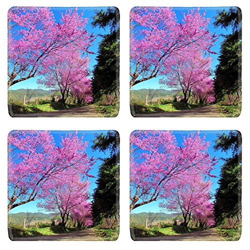 Liili Square Coasters Non-Slip Natural Rubber Desk Pads IMAGE ID: 16137790 Cherry Blossom Pathway in ChiangMai Thailand