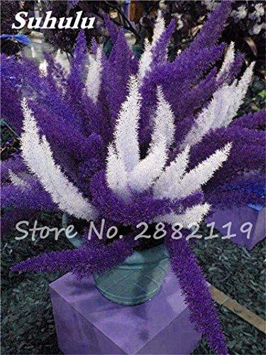Lowest Price! 100 Pcs Foxtail Seeds Mixed Foxtail Ferns Bonsai Grass Plants Perennial Flowers Natural Growth For Home & Garden 4 (Best Price Garden Seeds)