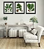 Botanical Print Set of 3 Antique Beautiful Redoute Acorn Tree Branch Green Leaf Nuts Forest Nature Home Room Decor Wall Art Unframed
