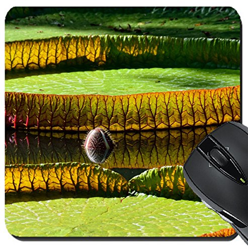 MSD Suqare Mousepad 8x8 Inch Mouse Pads/Mat design 19845737 Giant amazonian lily in water at the Pamplemousess botanical Gardens in Mauritius Victoria amazonica Victoria - Gardens California Victoria