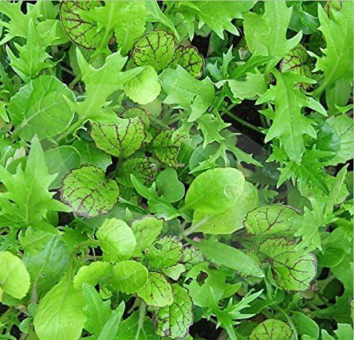 Nuevo Hogar Jardín de Plantas 100 semillas Ensalada oriental de la mezcla de la hoja Vegetable Seeds: Amazon.es: Jardín