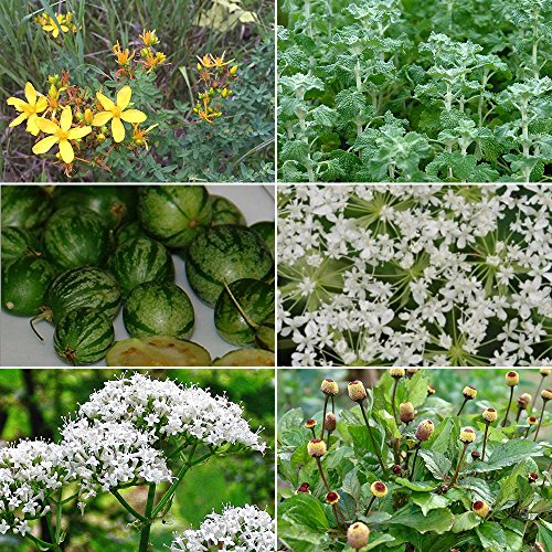 Medicinal Herb Garden Seed Collection #9 - A 6 Variety Pack of Rare Medicinal Herb Seeds! FROZEN SEED CAPSULES - The Very Best in Long-Term Seed Storage - Plant Seeds - Capsule Collection