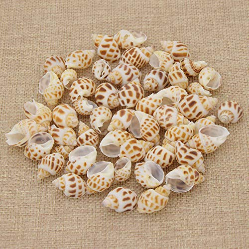 Mini Decorative Shells Miniatures Seashells Home Garden Aquarium Accessories (Model - #13 50pcs)