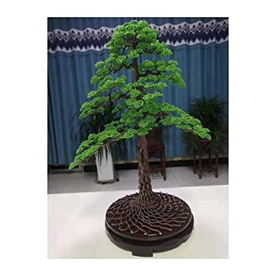 SXGKY Decor Lucky Tree Bonsai Juniper Tree Money Tree Bonsai Bring Wealth and Good Luck 50x45cm: Home & Kitchen