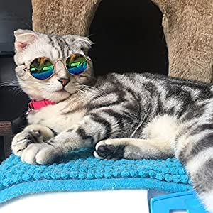 Amyove Fashion Cool Cat Glasses Pet Dog Eye Protection Sunglasses Puppy Kitty Photo Props Toy Green