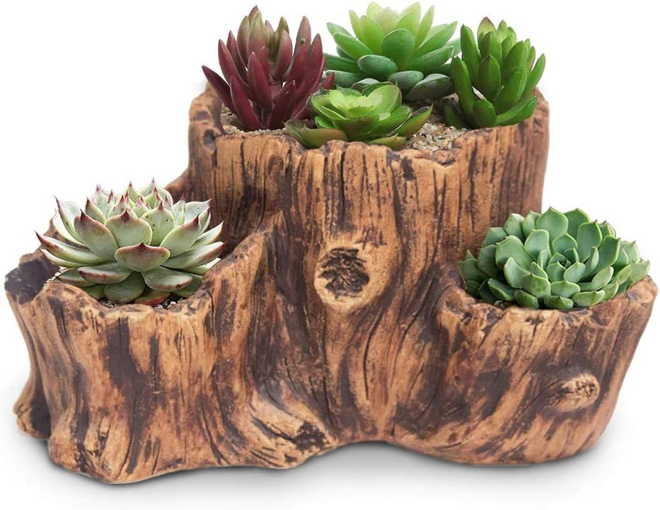 Driftwood Potted Succulent Potted Succulents Succulents