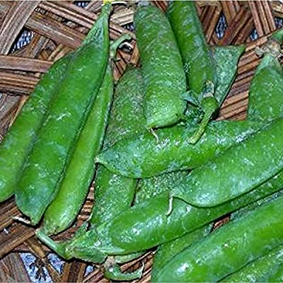 Wando Pea Garden Seeds - Non-GMO, Heirloom Vegetable Gardening Seed