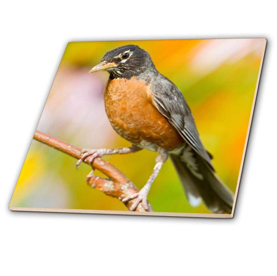 3dRose ct/_205895/_4 American Robin Perched in Flower Garden 12 Marion USA Ceramic Tile Illinois