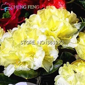 50pcs / bag Semillas hermosas Mao Juan flor de Bonsai Seeds Plantas en Casa y Jardín Macetas Macetas