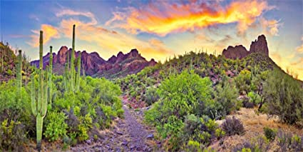 Aofoto 15x8ft American National Park Desert Backdrop Poster Spring Sunset Cactus Sandstone Mountain Landscape Background Cloth For Photography Video