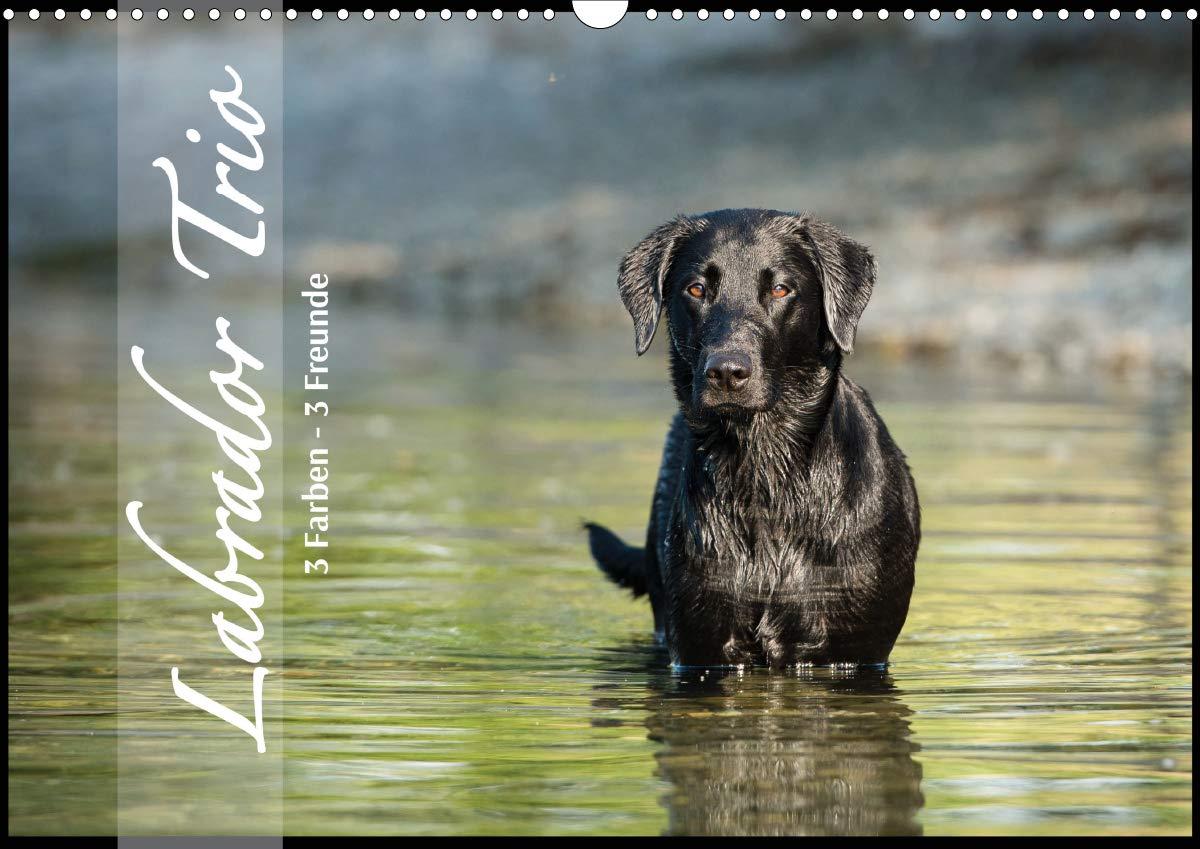 Labrador Trio   3 Farben 3 Freunde  Wandkalender 2020 DIN A3 Quer