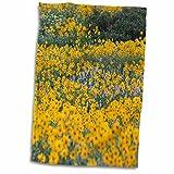 3dRose Danita Delimont - Flowers - Wildflowers, Willard Basin near Mantua, Utah, USA - US45 HGA0382 - Howie Garber - 12x18 Hand Towel (twl_147283_1)