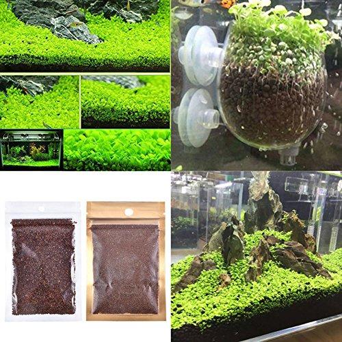 Desconocido Ragdoll50 semillas de plantas montón acuario acuático doble alfombra de hojas decoración pecera agua hierba tamaño libre como muestra la imagen: ...