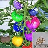Rosepoem 100ピース非常に珍しい輸入虹トマト種子盆栽果物&野菜の種子非GMO家庭の鉢植え
