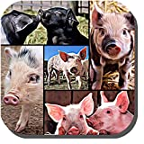 6 little piggies photo collage coasters. Adorable, intelligent, sweet piglet portraits. Coasters Gift pack of 6 little piggy collage