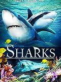 Sharks (2D)