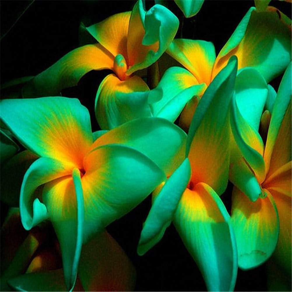lamta1k 100 Piezas de Color Mezclado Plumeria Semillas Alta tasa de Supervivencia Home Garden Bonsai Flor DIY decoración - Plumeria Semillas