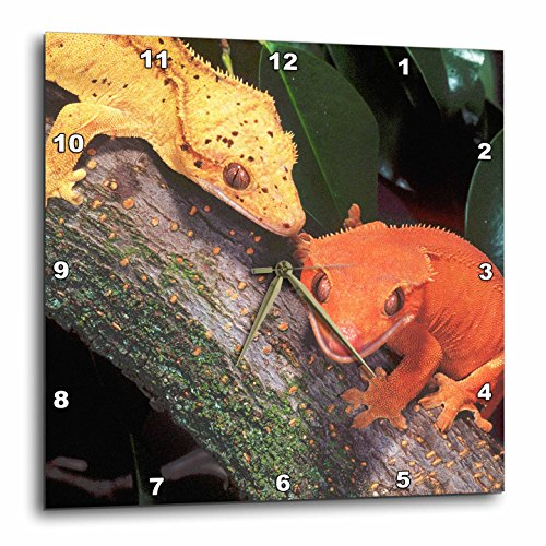 - 3dRose dpp_83859_1 New Caledonia Crested Geckos, lizard - NA02 DNO0243 - David Northcott - Wall Clock, 10 by 10-Inch