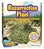Dunecraft Resurrection Plant Science Kit