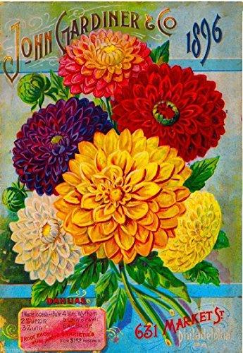 1896 Philadelphia Pennsylvania John Gardiner Dahlias Vintage Flowers Seed Packet Travel Advertisement Art Poster