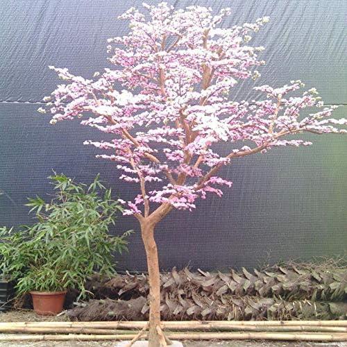 HONIC Rare Red Pink Japanese cherry blossoms Courtyard Garden Bonsai Tree Small Sakura Tree Mixed Colors 10 Pieces